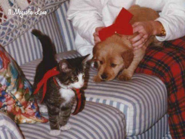 Christmas kitten puppy