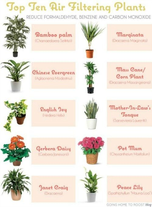 Top 10 air-filtering houseplants