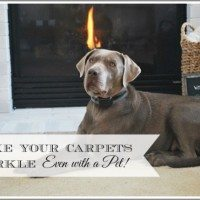 Clean Up Your Carpets this Spring w/ BISSELL–Even when you have Pets!