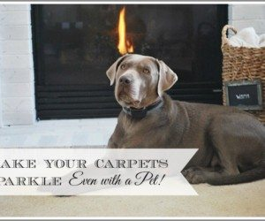 Pets are great, but can wreck havoc on carpets. See how to keep your carpets looking clean and fresh even if you have pets!